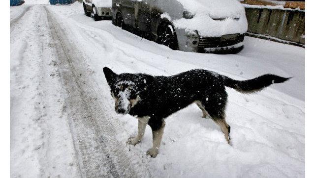 В Москве более 360 детей пострадали от собак за два месяца