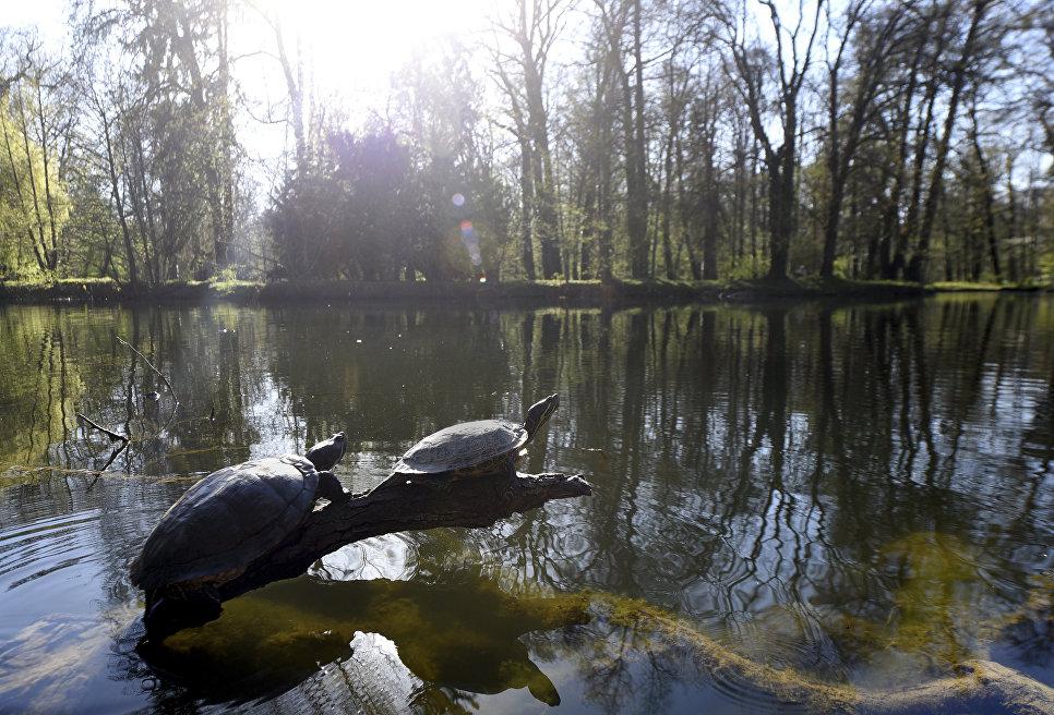 Черепахи в парке Максимир в Загребе, Хорватия