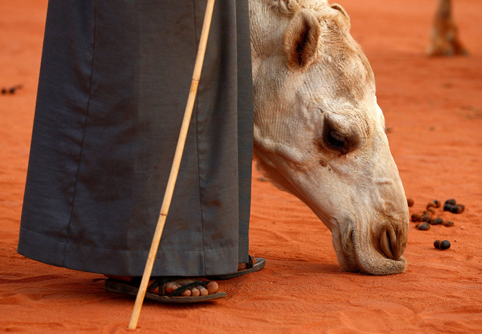 Мужчина стоит рядом со своим верблюдом на фестивале верблюдов в Саудовской Аравии