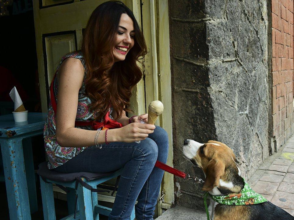 Собака кушает мороженое для животных в городе Мехико