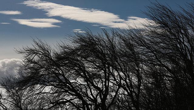 Ветреная погода. Архивное фото