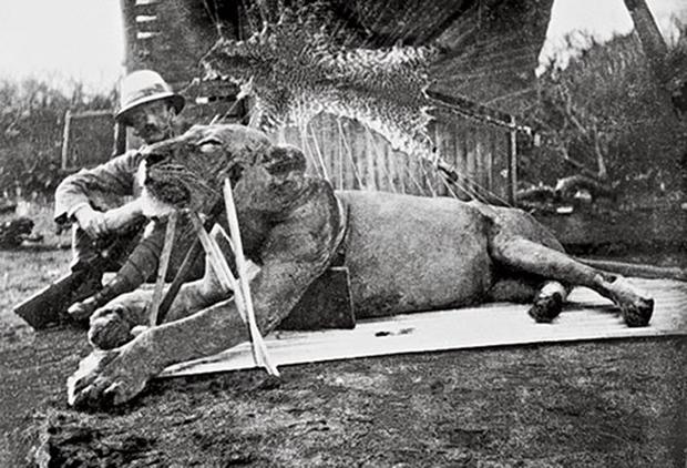 Ученые узнали, почему посути львы-людоеды убивали людей