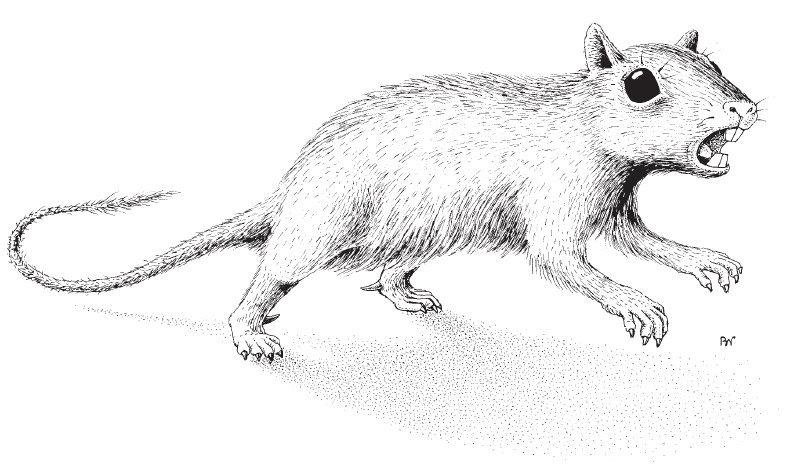 Русские ученые открыли новый вид вымерших млекопитающих