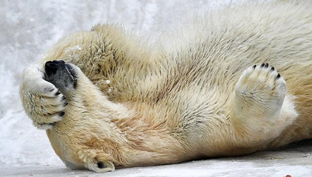 В России через два года появятся пакетные туры в Арктику