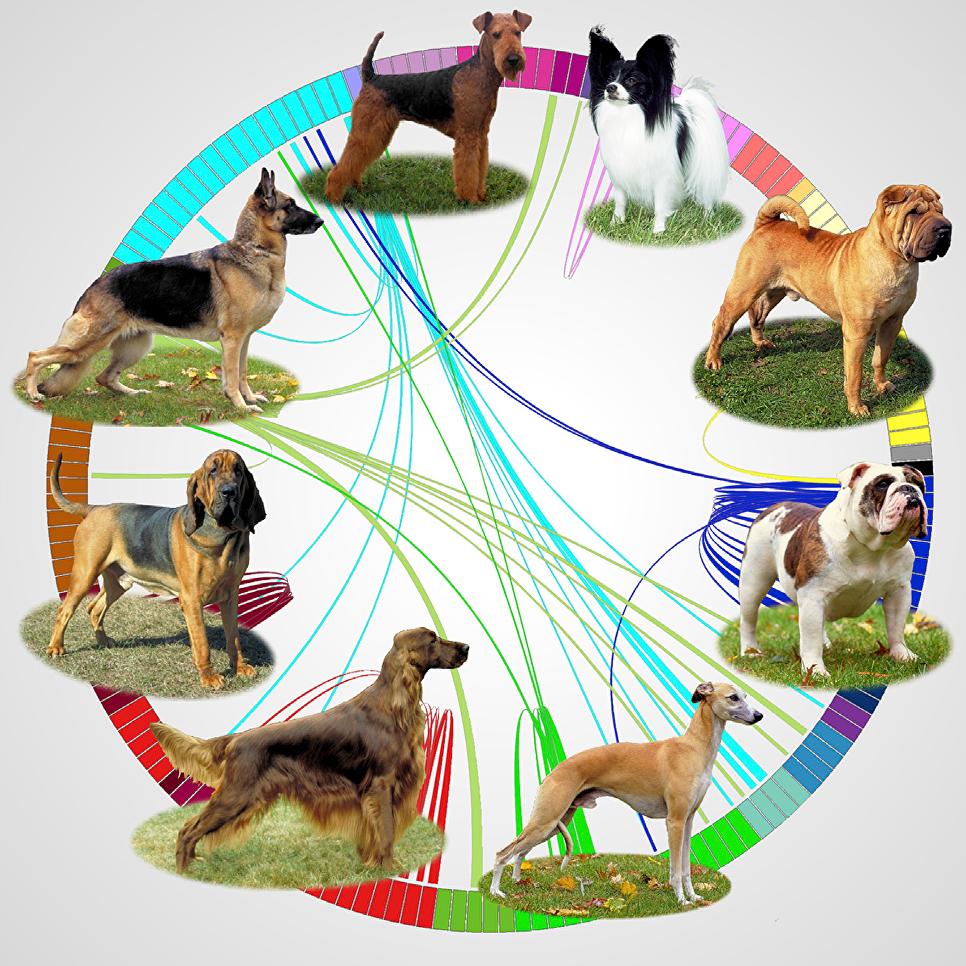 Генетики расшифровали ДНК собак и отыскали одного общего предка