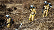 Обстановка с природными пожарами в России. Архивное фото