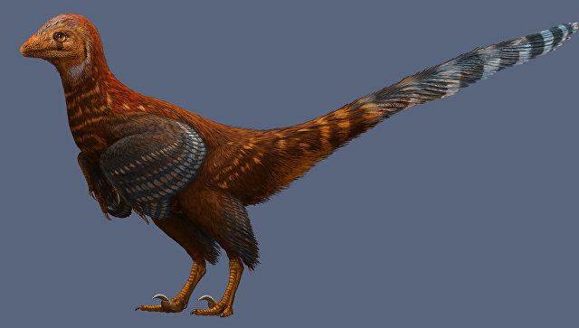 Реконструкция облика Jianianhualong tengi, динозавра с птичьими перьями