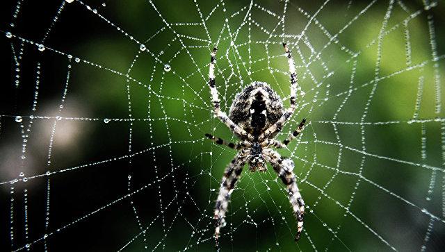 Ученые в Британии изучают паучьи прыжки для разработки микророботов