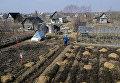 Жители Новгородской области работают на своих садово-огородных участках