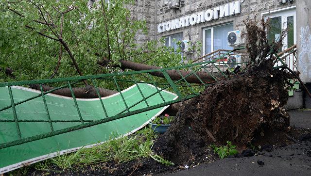 Поваленные ураганом деревья, во дворе жилого дома в Москве
