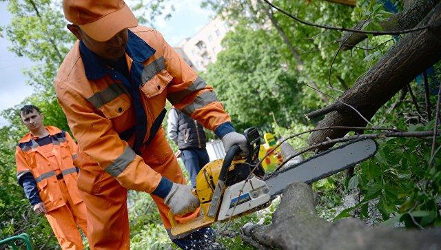 Работники коммунальных служб отпиливают ветки поваленных деревьев в одном из дворов Москвы