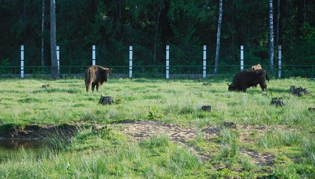 Из-за включения всписок ЮНЕСКО реликтовая Беловежская пуща оказалась награни исчезновения