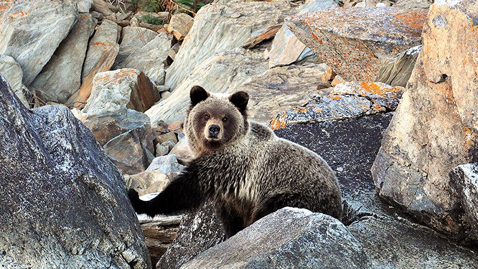 Это самое медвежье место в континентальной части России