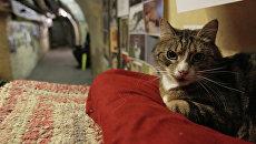 Кот в подвале Эрмитажа во время ежегодной акции День эрмитажного кота