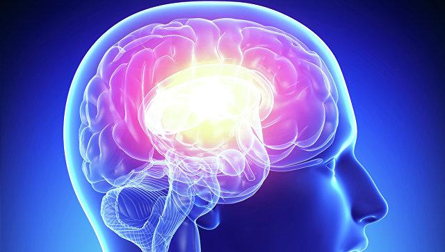 Мозг . Архивное фото
