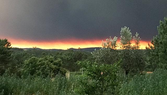 Лесные пожары вПортугалии забрали  жизни 57 человек