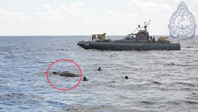 Военные Шри-Ланки 12 часов спасали слона, унесенного вморе