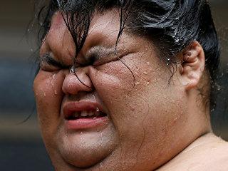 Борец сумо во время тренировки в Нагое, Япония