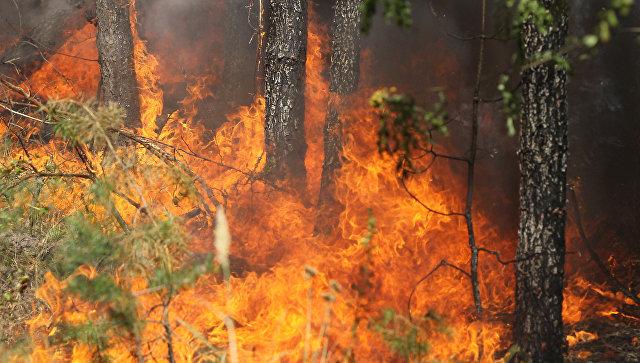 Хорватские власти рассказали о поджигателях, устраивающих лесные пожары