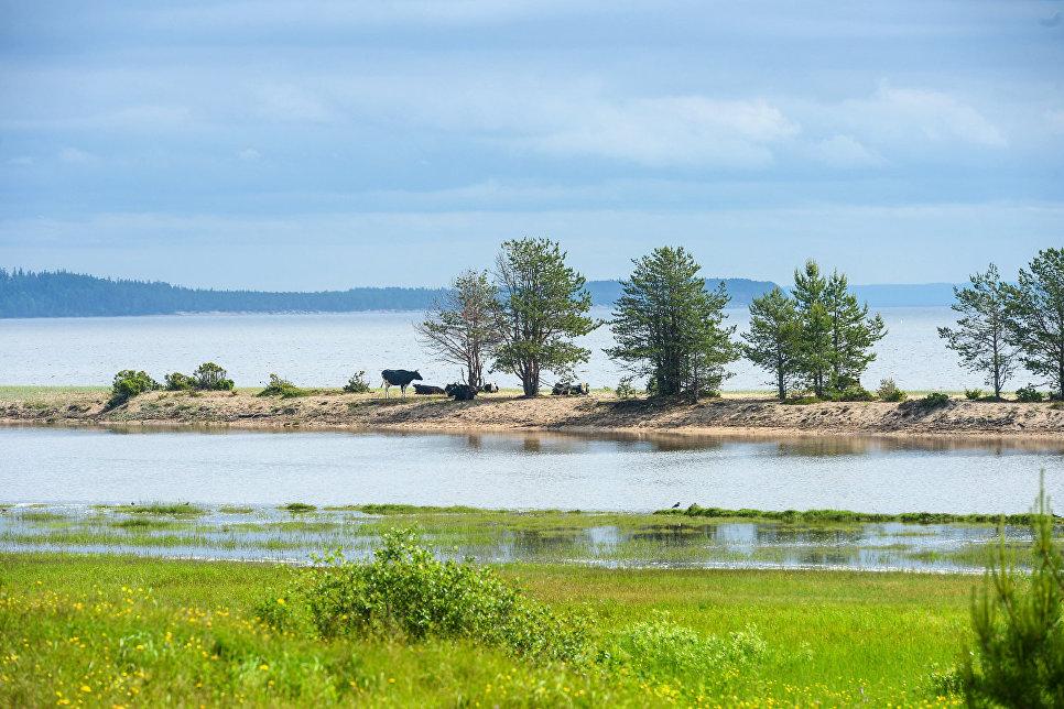 Устье реки Пурнема в Онежском районе Архангельской области рядом с селом Пурнема