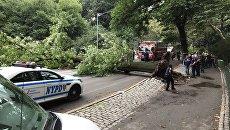 Упавшее дерево в Центральном парке Нью-Йорка. 15 августа 2017