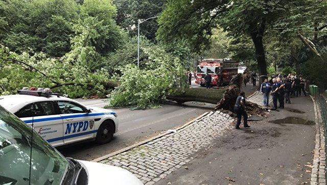 Дерево рухнуло наженщину итроих детей впарке Нью-Йорка