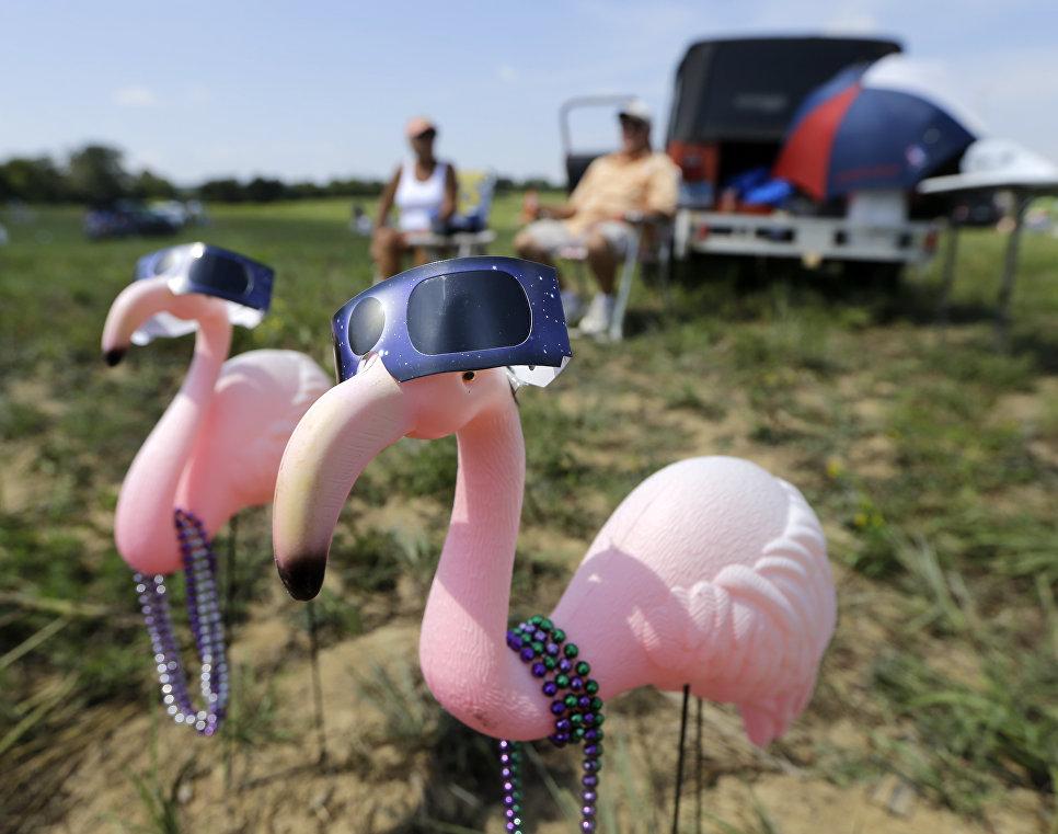 Пластиковые розовые фламинго в защитных очках. 21 августа 2017