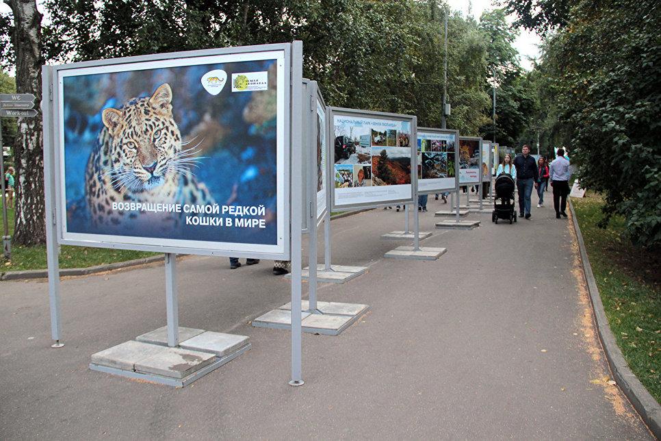 В рамках фестиваля прошла фотовыставка Дальневосточные леопарды, посвященная защите этой дикой кошки