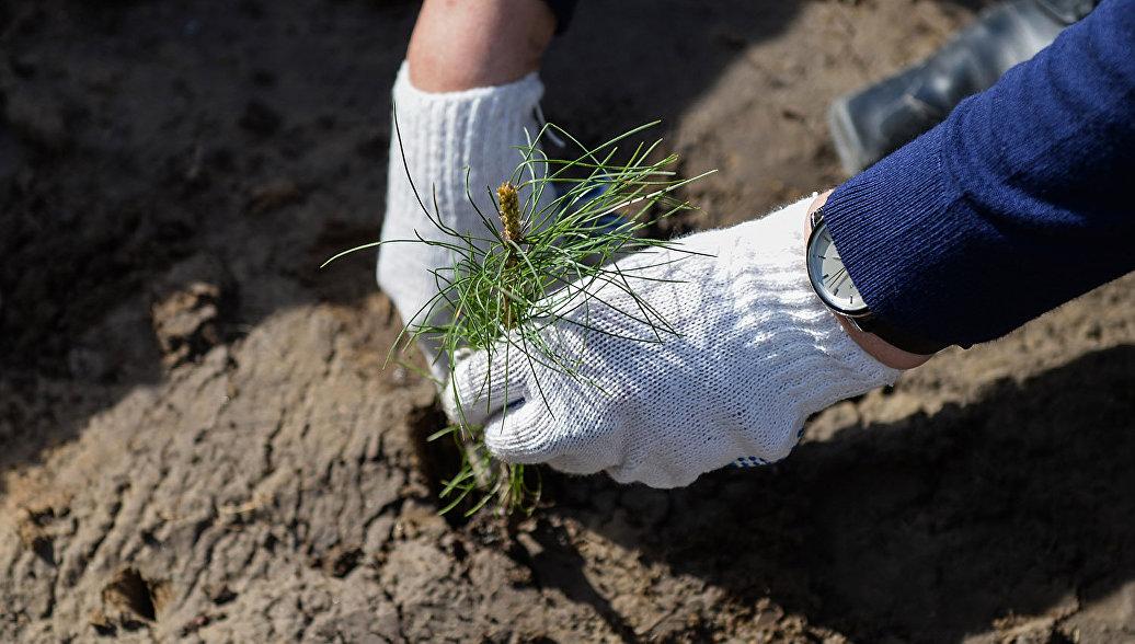 Воробьев пригласил всех граждан Подмосковья наакцию «Наш лес. Посади свое дерево»