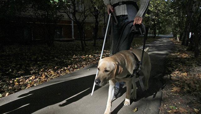ВУльяновске инвалидам запретили усаживаться вавтобус из-за собак-поводырей