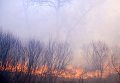 Лесные пожары в Курганской области