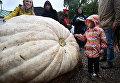 Презентация самой большой тыквы, выращенной в России