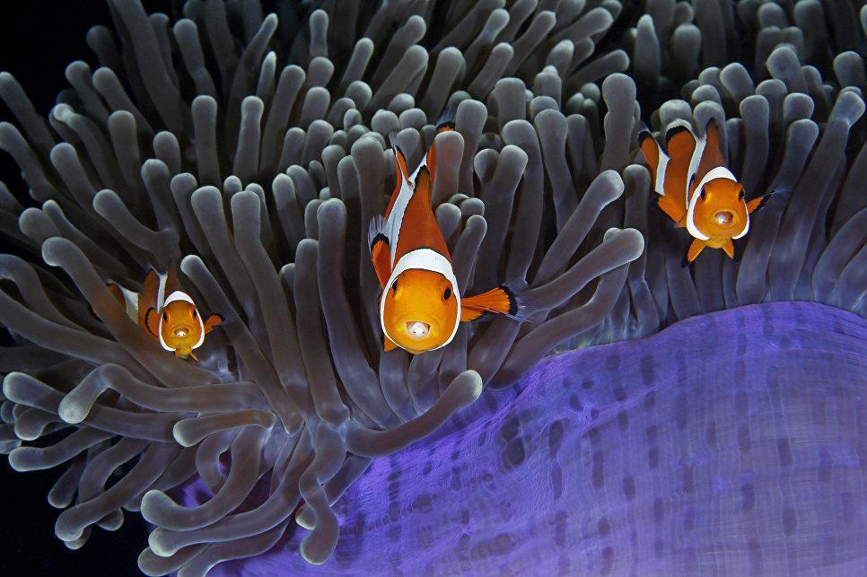 Работа фотографа из Китая Qing Lin The insiders в категории Подводный мир в финале конкурса Wildlife Photographer of the Year 2017