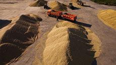 Зерновой ток. Архивное фото