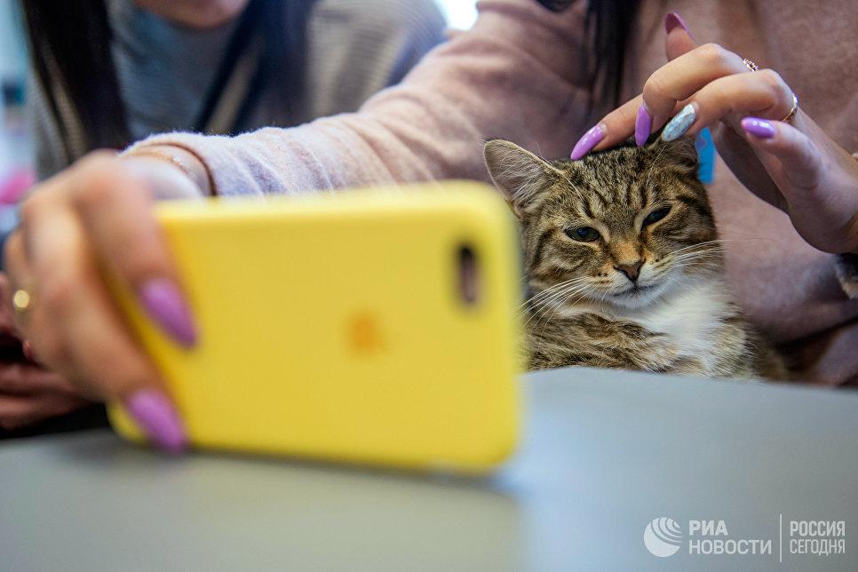 Посетительница котокафе Республика кошек в Санкт-Петербурге, где ежемесячно проходят благотворительные акции Все оттенки кошачьего по раздаче кошек из городских приютов в добрые руки