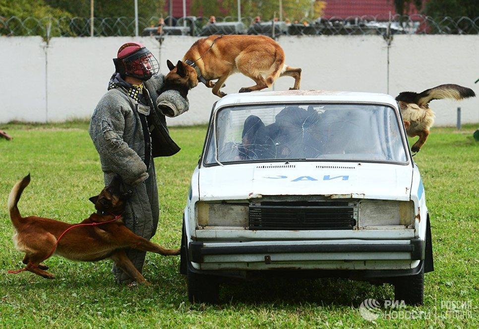 Тренировка служебных собак войск Нацгвардии в рамках чемпионата войск Национальной гвардии по многоборью кинологов в Московской области