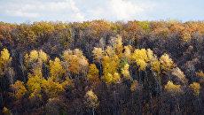Подмосковный лес. Архивное фото