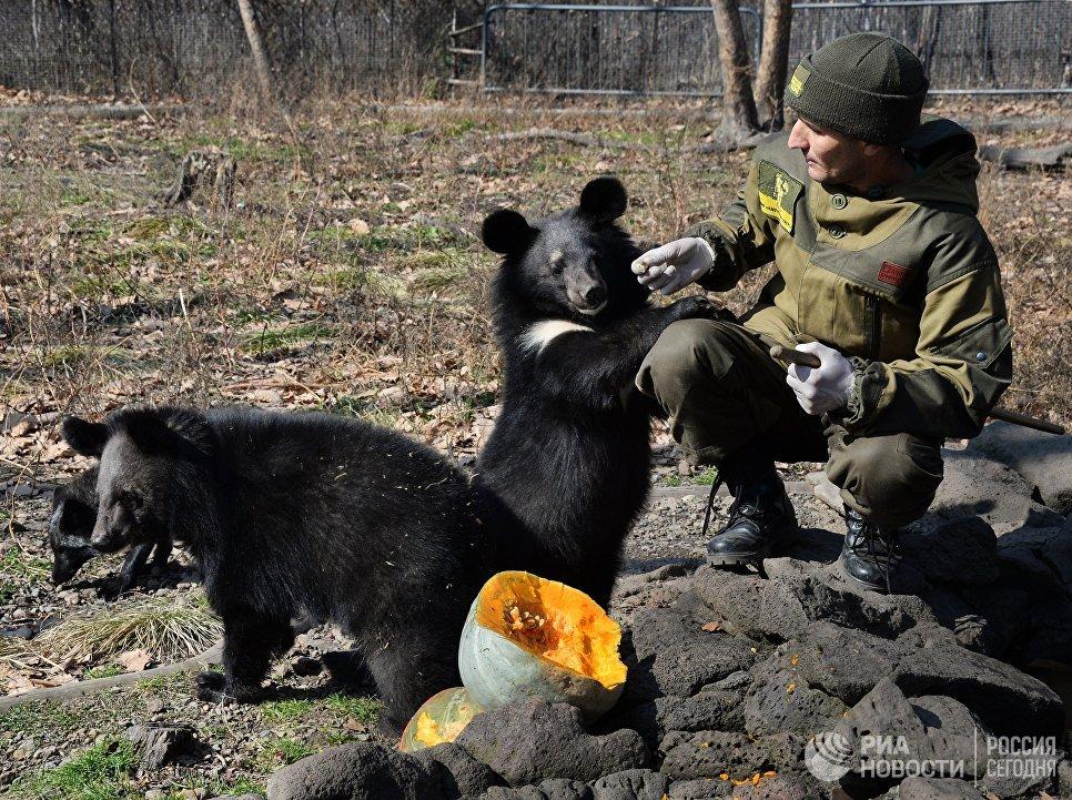 Гималайские медвежата в Приморском сафари-парке
