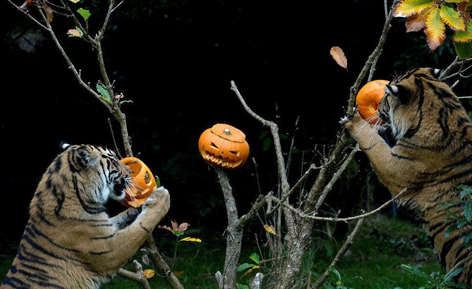 Навстречу Хэллоуину: жители России верят вприметы, ноне внечистую силу