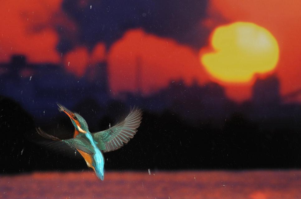 Jose Luis Rodriguez. Flight for Life