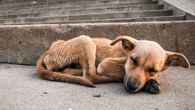 В Китае мужчину задержали за продажу мяса краденых собак в рестораны
