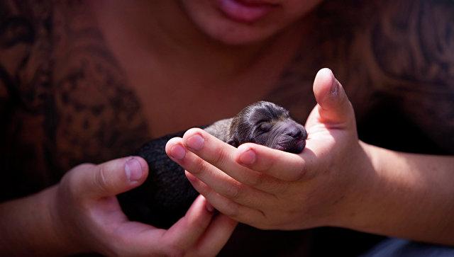 Волонтер держит спасенного щенка, Китай