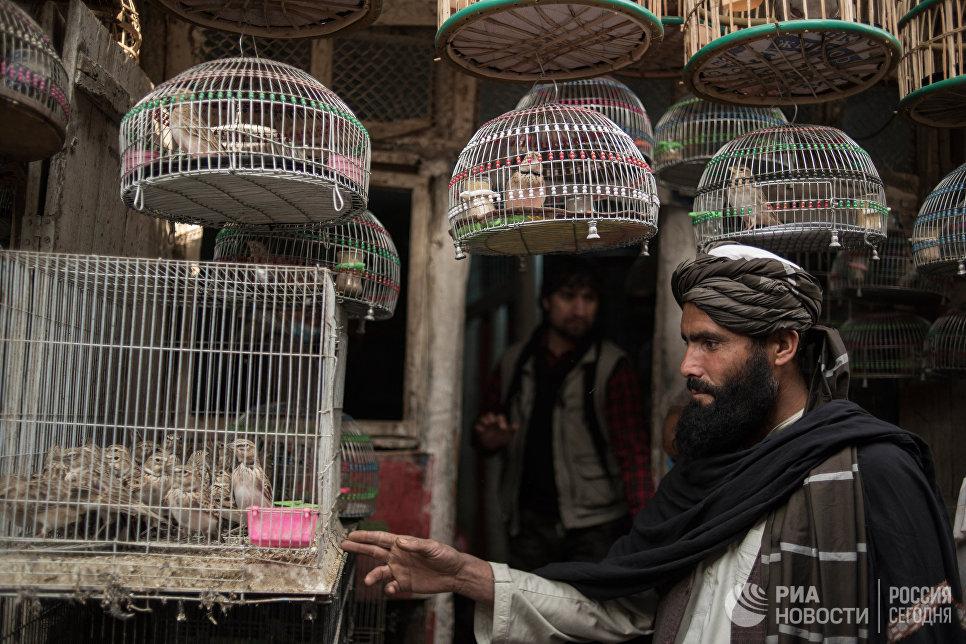 Покупатель на птичьем рынке в Кабуле