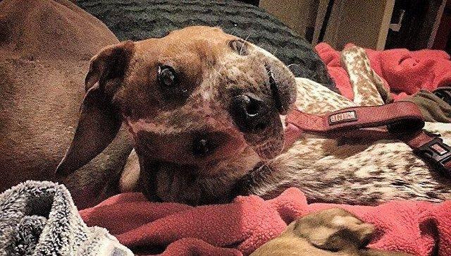 «Почему это существо оживленно?»: соцсети пожалели собаку, чье уродство оказалось иллюзией