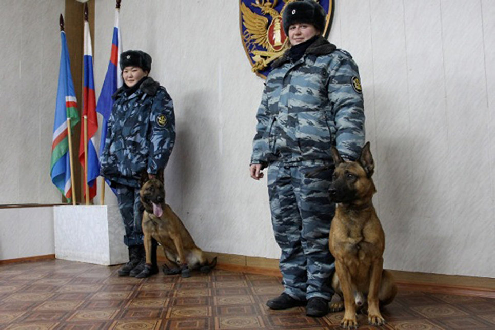 Клонированные вЮжной Корее собаки поступили наслужбу вякутскую ФСИН