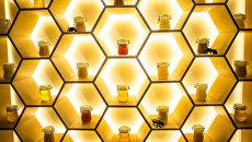 Сладкая жизнь на ВДНХ: в павильоне №28 открылся музей «пчеловодство»
