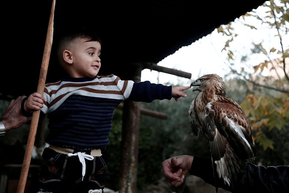 Палестинский мальчик играет с соколом в городе Тубас на Западном берегу