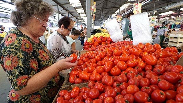 Продажа томатов