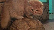 Кот Батон из иркутской зоогалереи