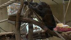 Животные в немецком зоопарке получили подарки от тайного Санты